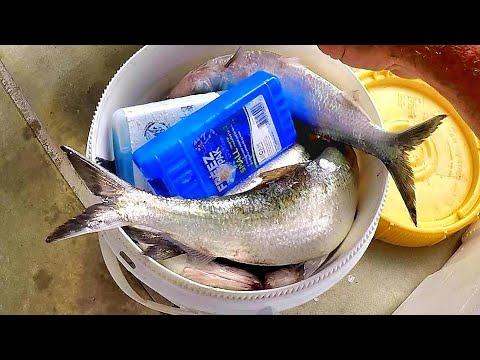 How To Catch The Best Catfish Bait On The Planet!