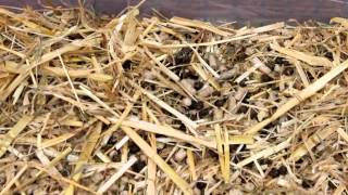 How I Clean My Rabbit Shed - Daily
