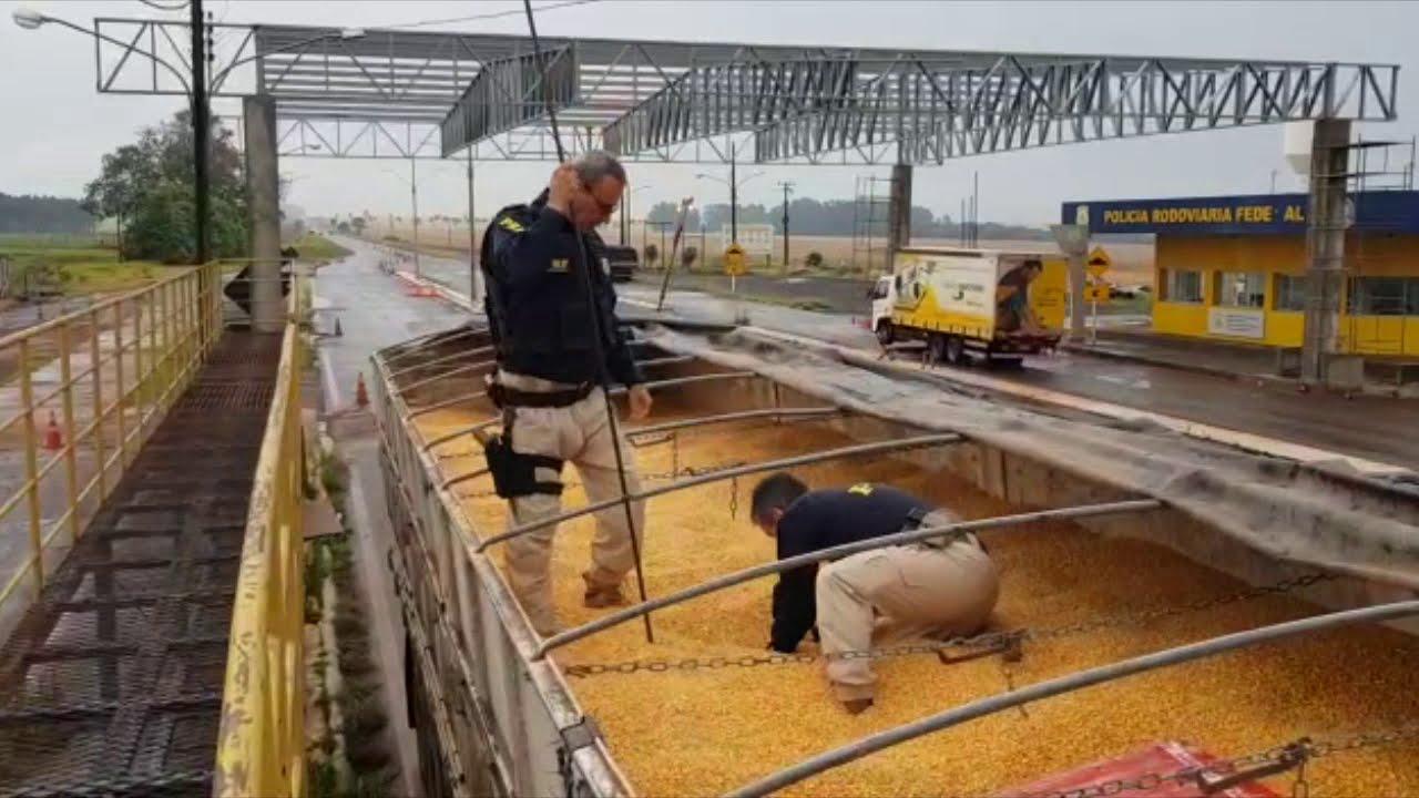 PRF apreende 11 toneladas de maconha sob carga de milho em Ponta Porã