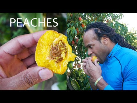 Peach Benefits For Health | Nutrition Tips