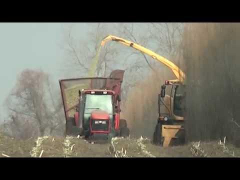 Shrub Willow Harvest Using New Holland 130FB Cutting Header