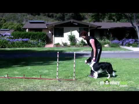 Dog Agility - Training Your Dog To Weave