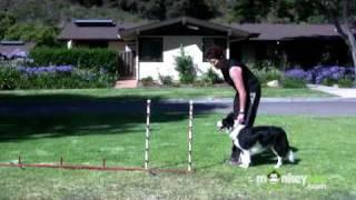 Dog Agility - Training Your Dog To Weave