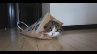 いろいろな紙袋とねこ。-Various paper bags and Maru.-
