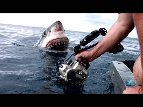 Great White Shark Gets Extremely Close And Smiles For Camera