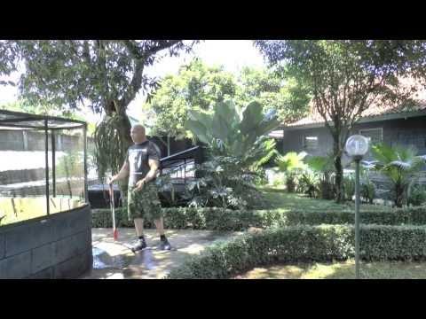 DM Exotics-Reptile Farm in Indonesia