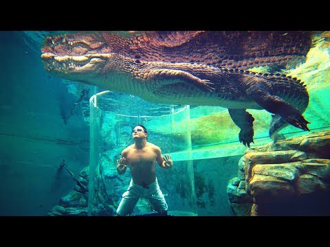दुनिया के 5 सबसे खतरनाक Swimming Pools | 5 Most Amazing And Incredible Pools You Will Ever See