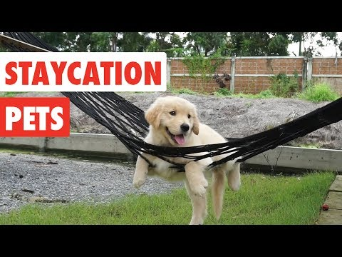 Staycation Pets | Funny Pet Video Compilation 2017