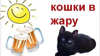 Кошки в жару.  Как помочь кошке в жару