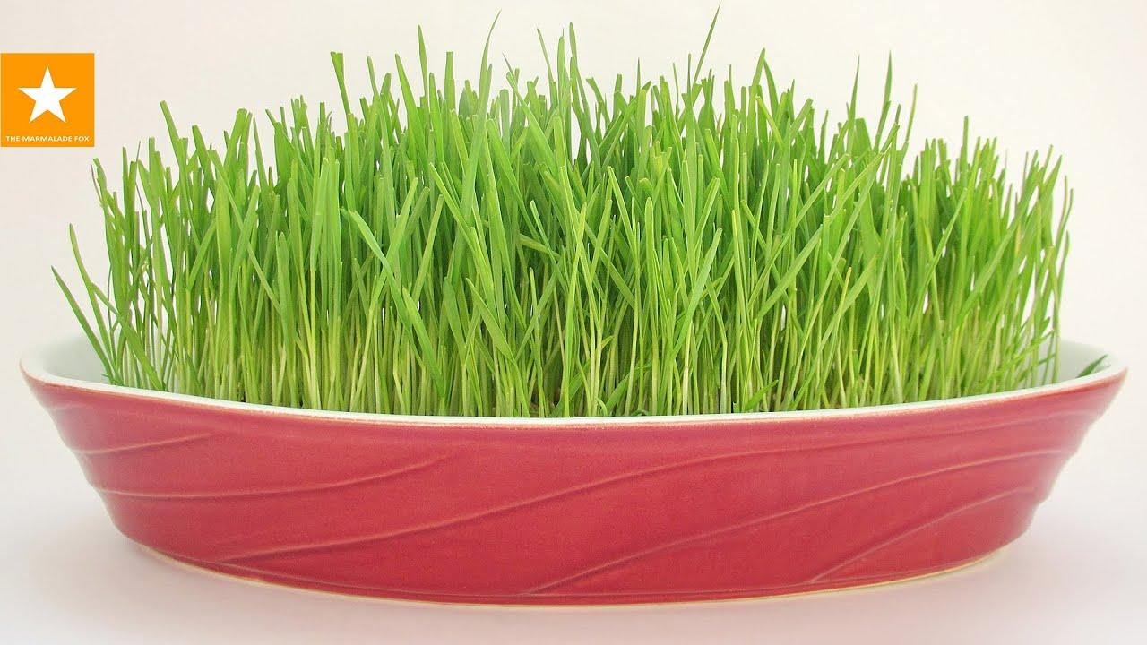 Искусственная зелень и ветки для декора оптом по выгодным ценам. Купить искусственная зелень и ветки для декора оптом с доставкой по москве и.