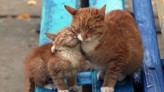 Мама-кошка и ее котенок воссоединились спустя 4 года разлуки!