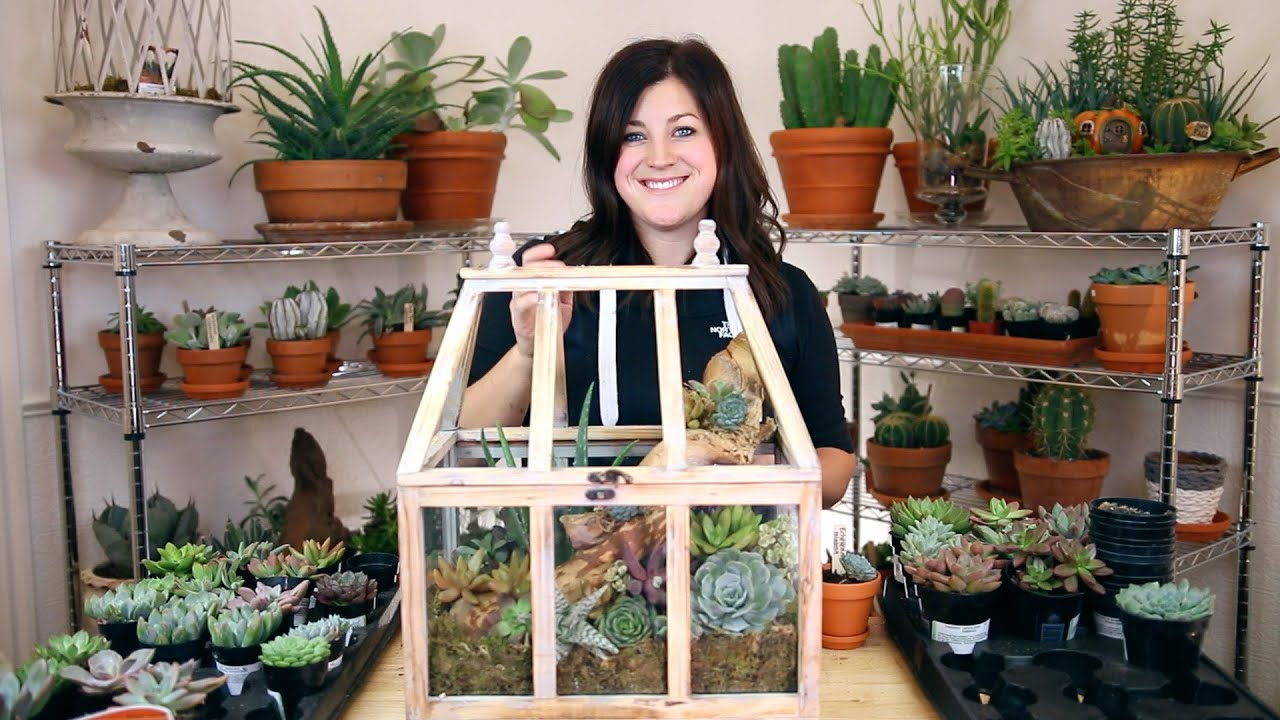 Succulent Arrangement In A Terrarium Full Version Youtube