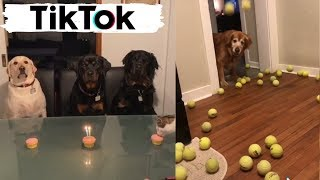 Dogs Doing Funny Things on TIK TOK - Try Not To Laugh - Cute Puppies - Best Compilation