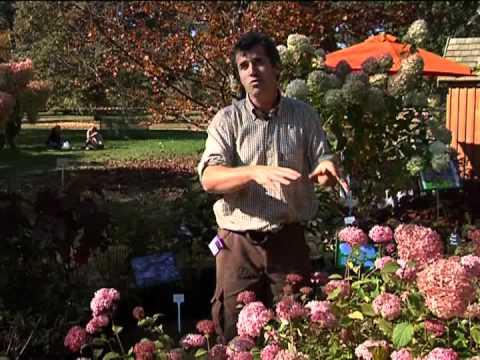 l 39 entretien de l 39 hortensia jardinerie truffaut tv doovi. Black Bedroom Furniture Sets. Home Design Ideas