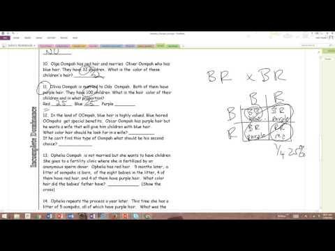 Answers Oompa Loompa Genetics YouTube