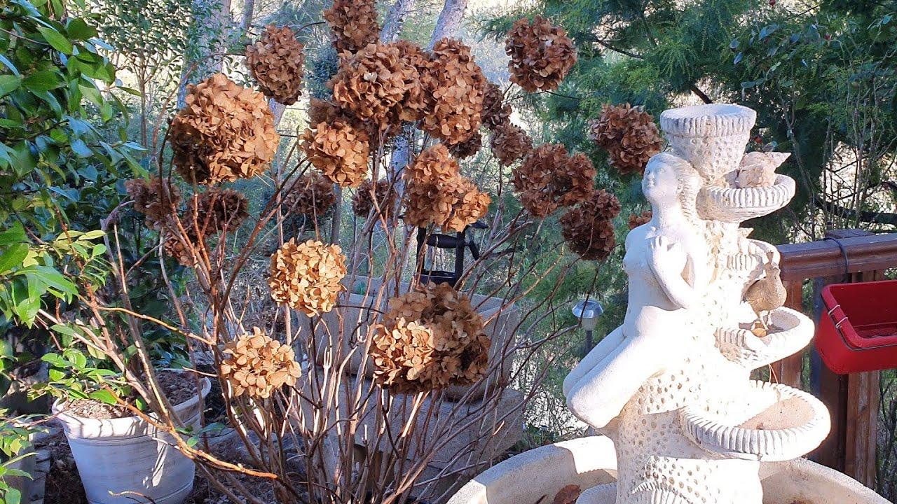 Первые Подарки к Рождеству/Макароны с овощами/Обзор сада и теплицы 23 ноября 2020
