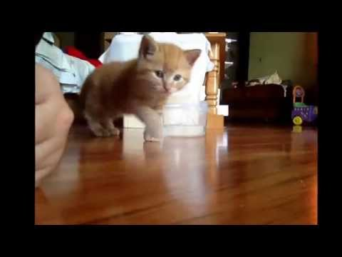 How to teach you're kitty to eat dry/wet food and use the litter box