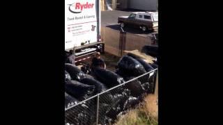 Bulldog Disposal
