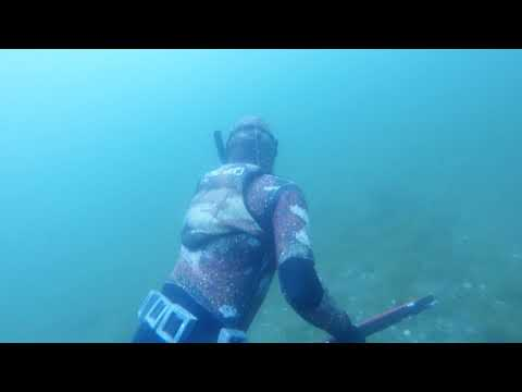 Diving With Lion's Mane Jellyfish And Dungeness Crab In Alaska!