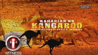 I-Witness: 'Kaharian ng Kangaroo,' a documentary by Howie Severino (w/ subtitles)