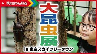 カブトムシどっさり! 大昆虫展 in 東京スカイツリータウンへ行ってきました! | まえちゃんねる thumbnail