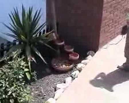 Fuente solar de jard n youtube - Fuente solar jardin ...