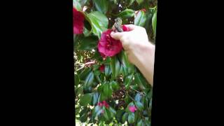 Humming bird too exhausted to fly away