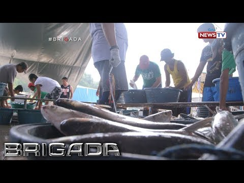 Brigada: Presyo Ng Bangus, Bakit Patuloy Na Tumataas?