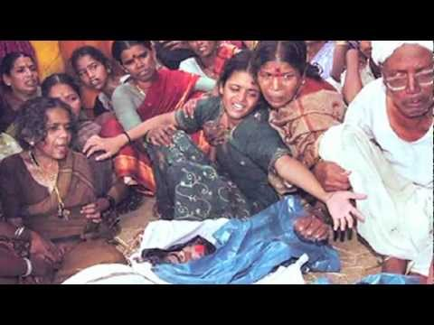 GMO Devastation in India