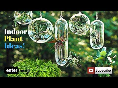 Indoor Plant Ideas for Interior Decoration