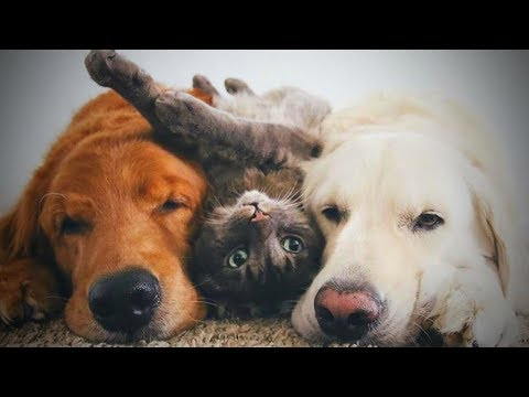 Cute Cats and Dogs ?? Cats and Dogs Friendship (Part 2) [Funny Pets]