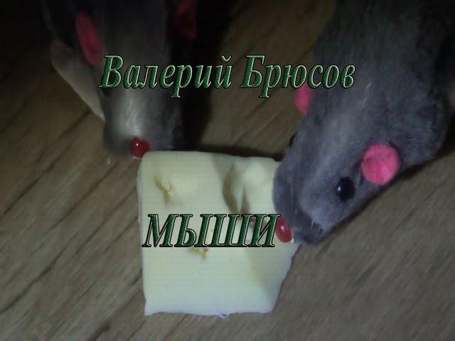 Изображение предпросмотра прочтения – АлександрКравченко читает произведение «Мыши (В нашем доме мыши поселились…)» В.Я.Брюсова