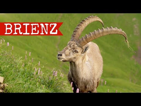 Brienz travel documentary | Rothorn Bahn & Giessbach falls | Switzerland 2017