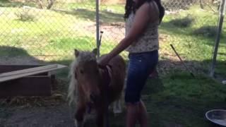 Wild Pony Ride
