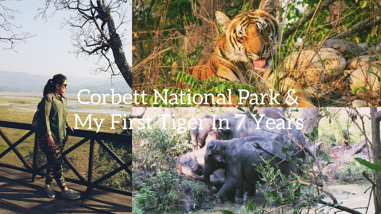 Nainital - Jim Corbett National Park Safari/First Ever Tiger Sighting in Life - Uttarakhand Wildlife