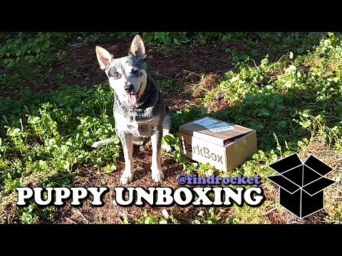Puppy Unboxing #9 - BarkBox 90s