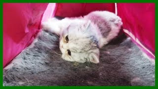 Video 5 Hours At The Emergency Vet download MP3, 3GP, MP4, WEBM, AVI, FLV Mei 2018