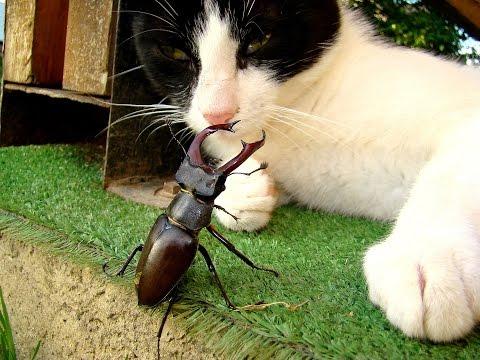 radasca si pisica
