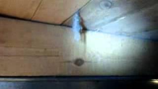 Мышь(, 2011-11-21T16:29:10.000Z)