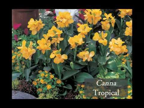 Aiuole fiorite fai da te come farle consigli di giard - Giardinieri in affitto consigli ...