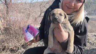"""Patiliköy'ün mücadelesi: Gerçekleşmeyen vaat: """"Hayvanları Koruma Kanunu"""""""