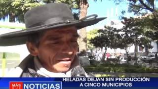 Heladas dejan sin producción a cinco municipios