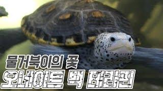 빅혼의 거북이 친구들아  안녕 !!!
