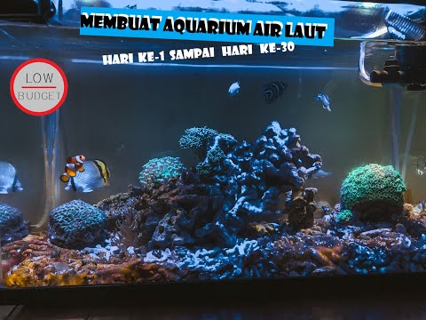 membuat-aquarium-air-laut-(hari-ke-1-s.d.-hari-ke-30)