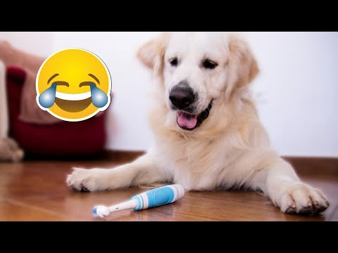 Funny Dog Reaction to Electric Toothbrush