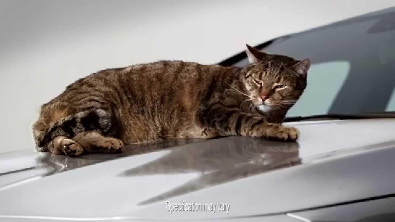 Mercedes Benz Cla >> The Mercedes-Benz CLA, a car with cat-titude | Mercedes-Benz Cars UK - YouTube