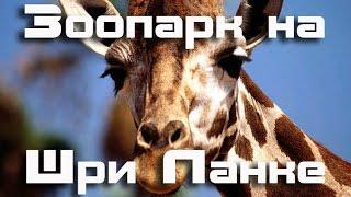 Зоопарк на Шри Ланке | Достопримечательности Коломбо(В этом видео мы покажем вам зоопарк Шри Ланки, который находится в Коломбо. Смешные зверьки ждут туристов..., 2014-11-21T03:53:05.000Z)