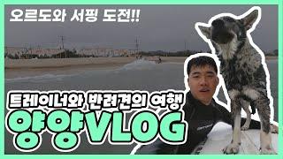 트레이너와 강아지의 양양 서피비치 Vlog / 반려견 …