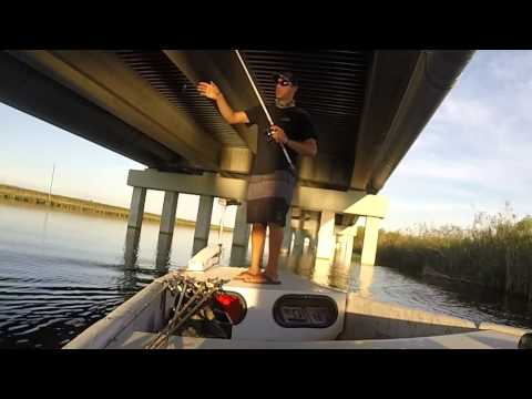 Tamiami Trail Bass Fishing