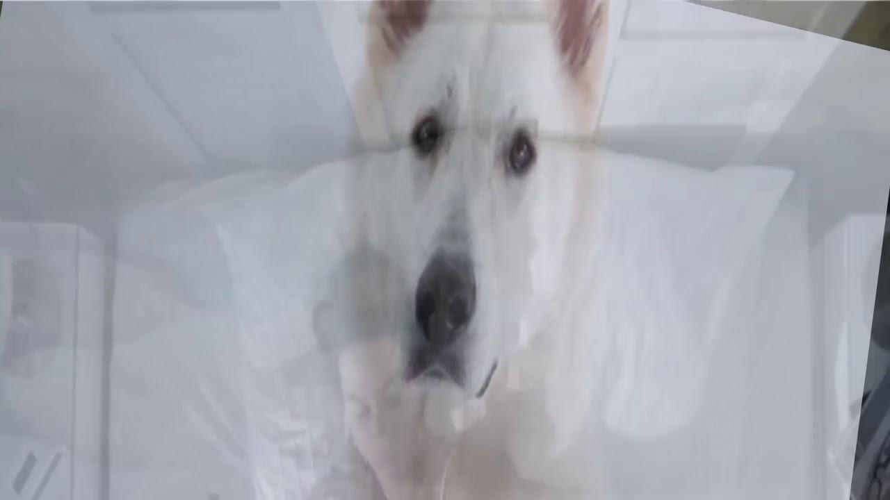 Palabras De Tu Perro Que Murió
